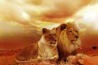 lion-577104_960_720-pixabay-CCO-Public-Domain-download-text-ur-27_06_2018-BLOG.jpg